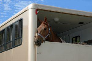 horseBox (1)