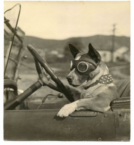 What happens when a driving dog and steampunk fashion collide? This.