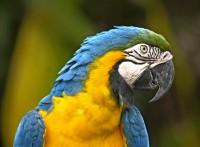 parrot-50202_640