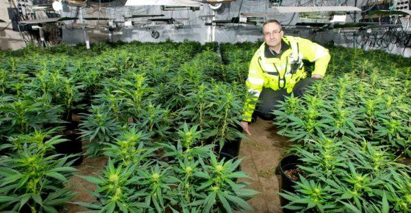 cannabis factory 4