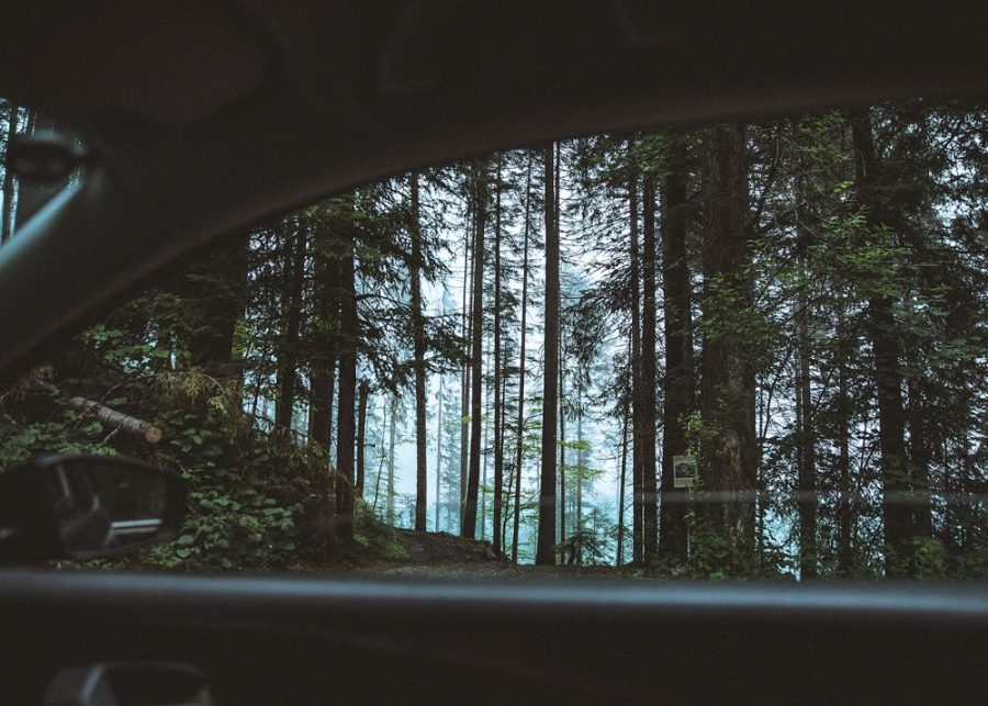 Forest out of a car window