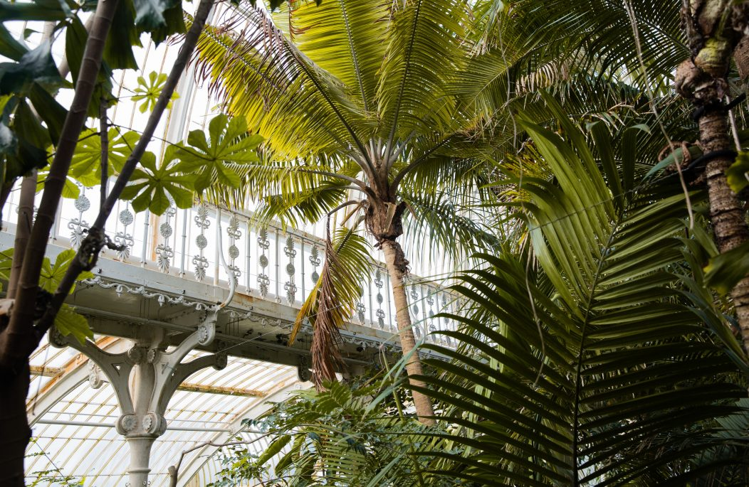 Creating A Room With A View The Iconic Victorian Glasshouse Victorian Homes